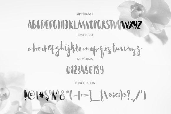 Acquainted Script Brush Font