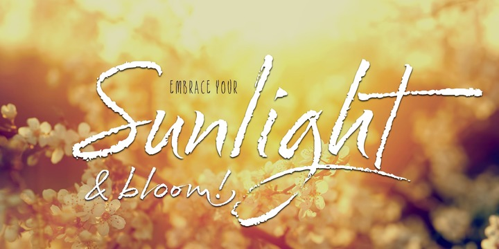 Cherry Blossoms Font Family