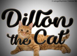 Dillon the Cat Font